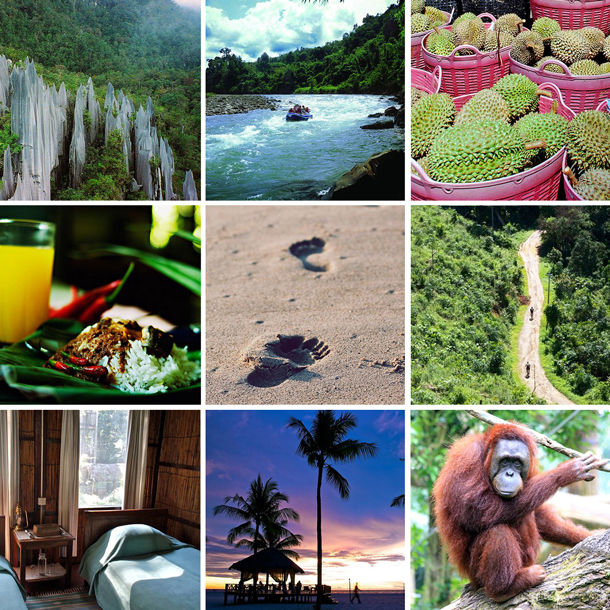 Borneo eco honeymoon patchwork