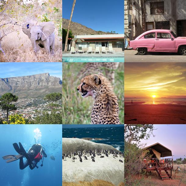 Africa safari honeymoon fund patchwork
