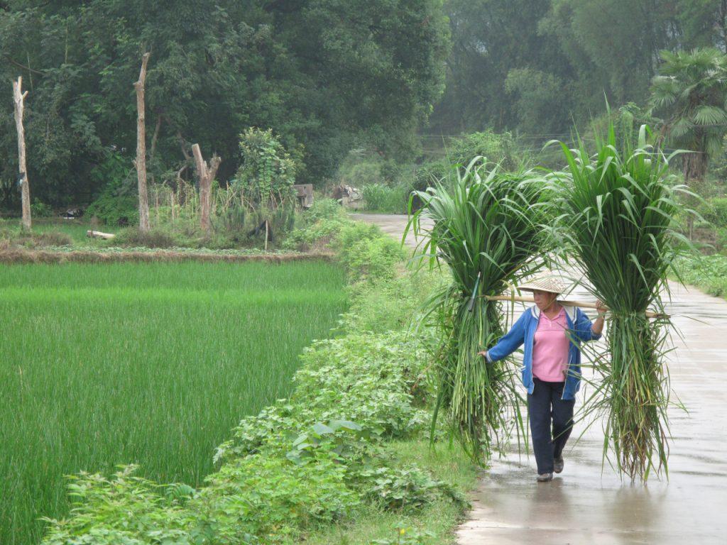 Vietnam gap year travel fund patchwork
