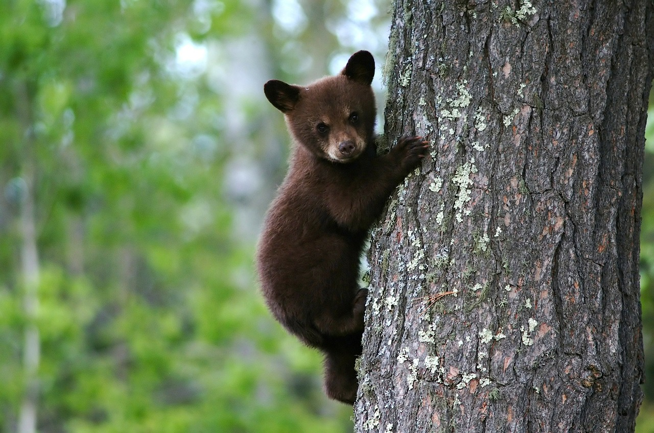 baby bear in tree gap year travel