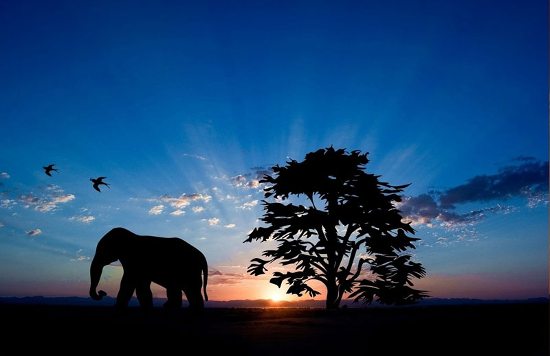 elephant against sunset sky