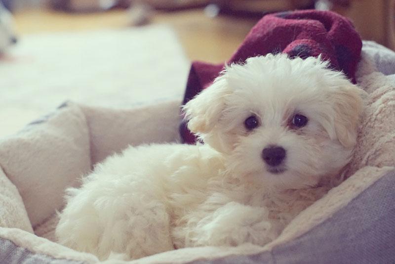 Jessica & Claudia's new puppy Matilda