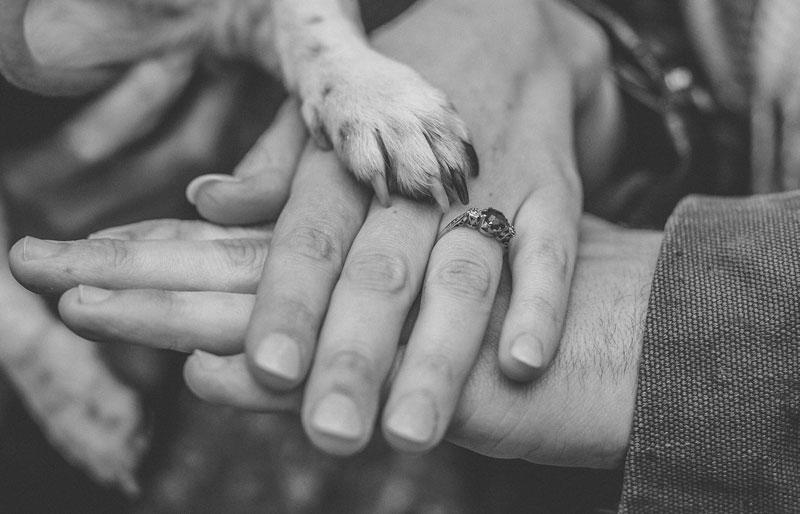 Engagement photo with dog paw