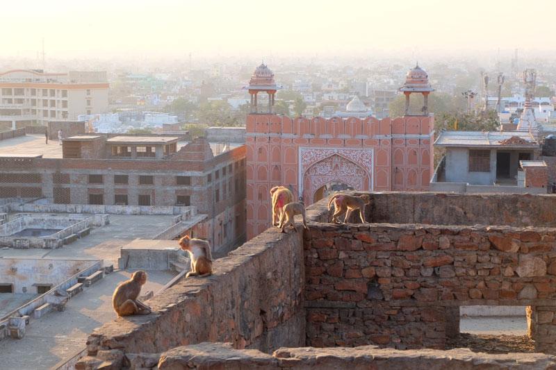 monkeys on derelict building - career break travel India