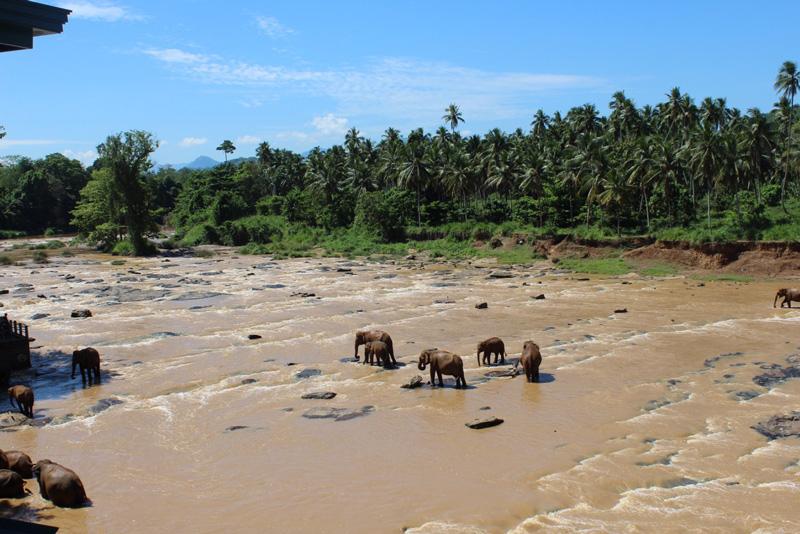 Patchwork couple honeymoon registry Sri Lanka