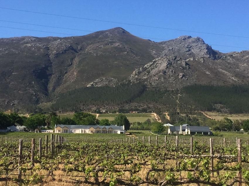 vineyards-with-mountains-in-the-background