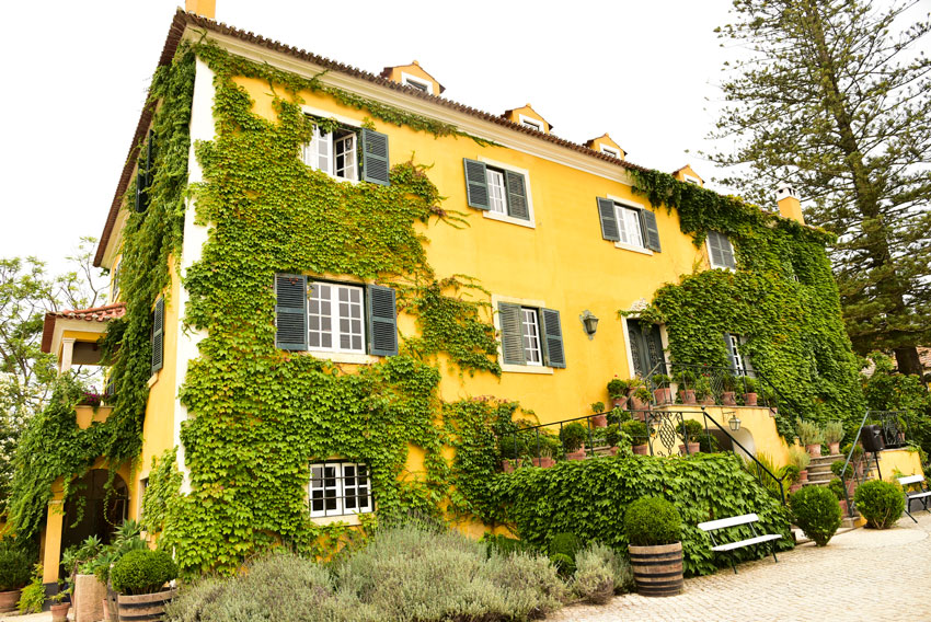 yellow-house-with-ivy