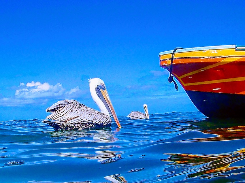 Pelicans sitting on water with blue sky and boat