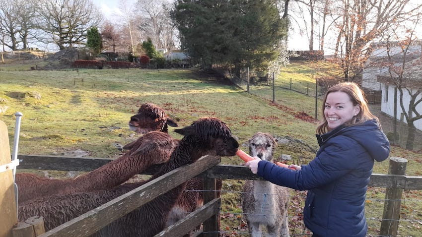 Sophie smiling and feeding llamas a carrot