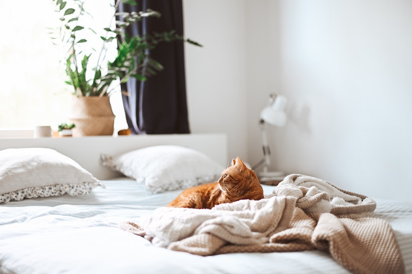 ginger cat lying on cosy looking neutral bed showing wedding registry staycation