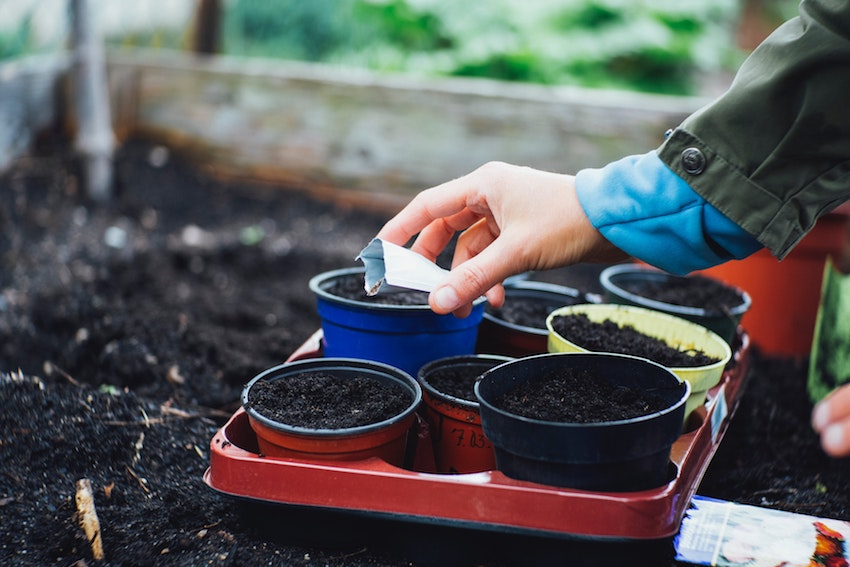 woman's hand planting seeds in pots in a garden