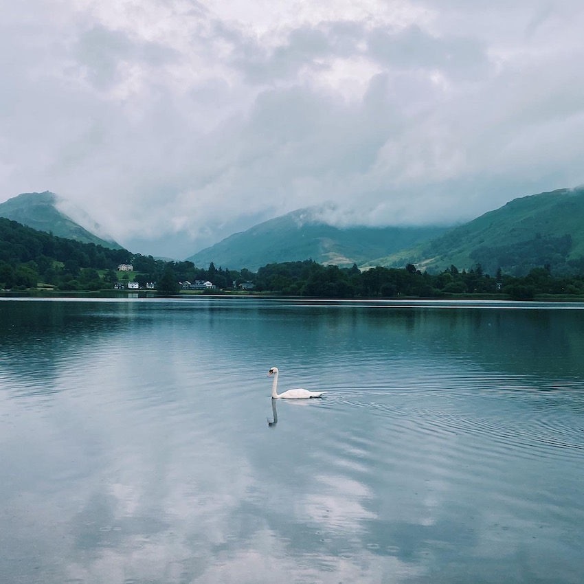 View across water with swan in centre, mountains of Lake District behind